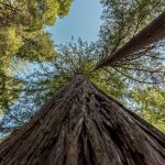 Nourishing Our Nature: Look Up